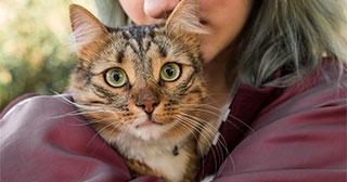 cat sitting updates portal at pet sitting algarve