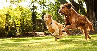 dog daycare service in algarve portugal