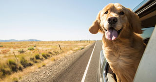 dog taxi and airport pet transport in portugal