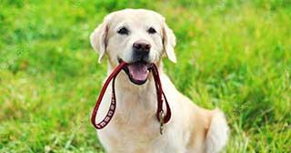 dog walking service in algarve portugal