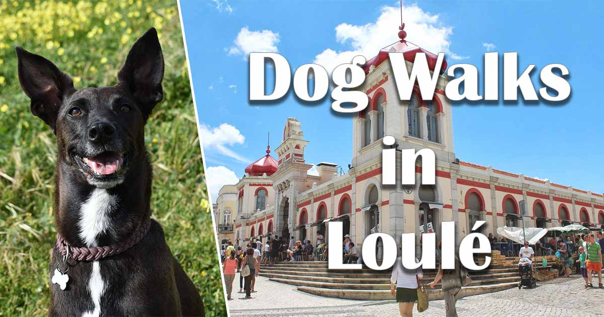 Dog Walks in Loule