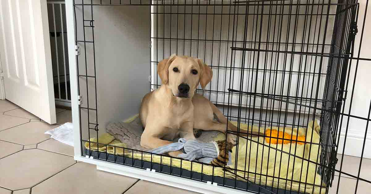 puppy crate training guide