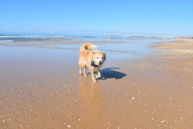 balu at meia praia