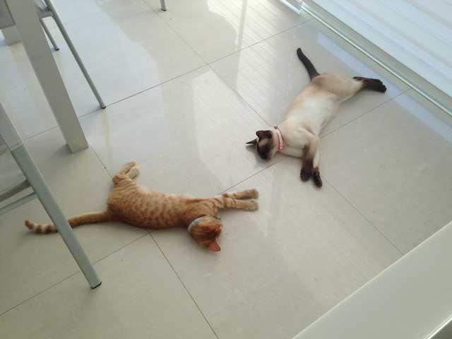 cat care in albufeira pet sitting algarve